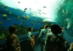 عالم تحت البحار